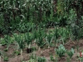 Privater Garten von Student und Projektmitarbeiter Ivan
