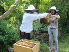 Bienen-1 klein