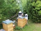 Bienen-2 klein
